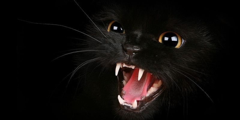 боязнь котов