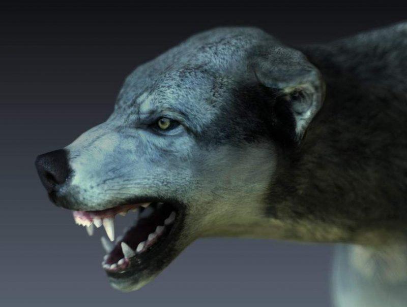 страх перед собаками